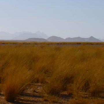Desert week – Al Baraka special