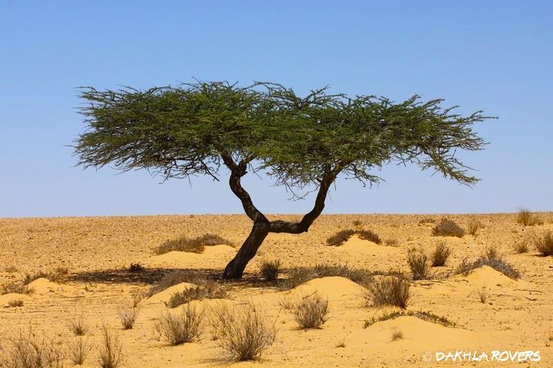Desert trip 2 days
